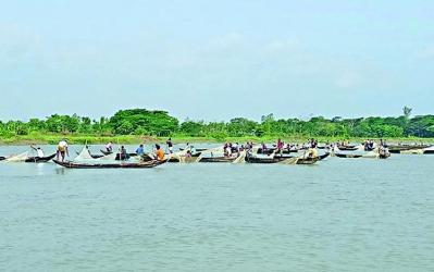 Indigenous fishes release huge eggs in Halda River