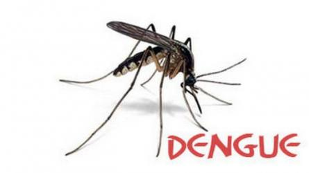 Dengue fever kills 12 in Laos in six months