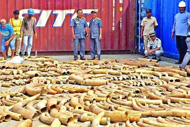 Cambodia seizes 3-ton haul of African ivory