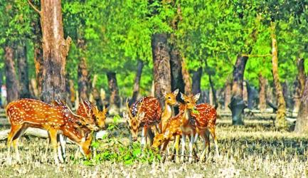 Indiscriminate Killing of wildlife