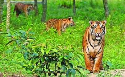 Save Sundarbans, the living museum of biodiversity