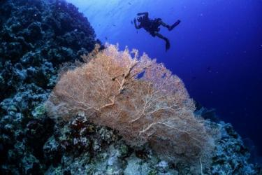 'Super corals' give glimmer of hope for world's dying reefs