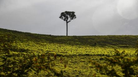 Deforestation in Brazil's Amazon up 85 percent in 2019