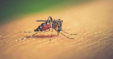 No new dengue case reported in 24 hrs: DGHS