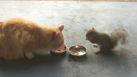 Cats at lunch and squirrels hoarding food