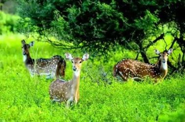 Need to conserve forest to enrich biodiversity