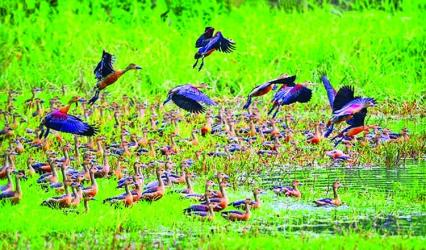 \'Habitat of migratory birds must be protected\'